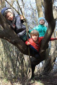 kids climbing in a tree